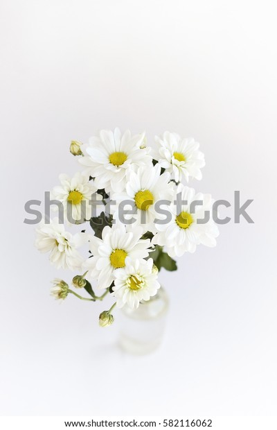 bouquet of daisies (Chrysanthemum white) on toned light background. soft focus