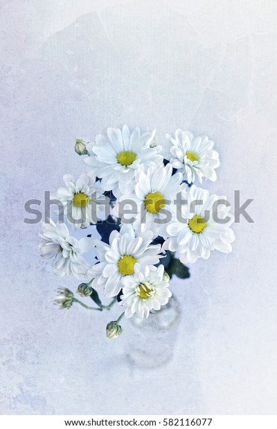 bouquet daisies (Chrysanthemum white) on the aged toned background.  old paper texture. soft focus, grunge texture