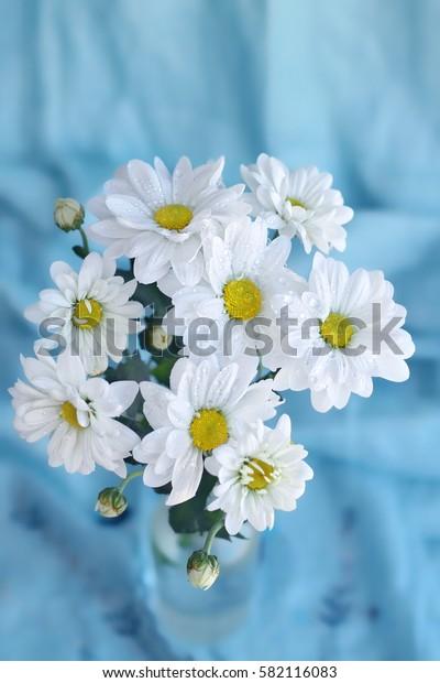 bouquet daisies (Chrysanthemum white) on blue fabric background. soft focus.
