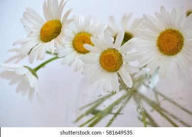 Bouquet of daisies in a clear vase in which the translucent green stems
