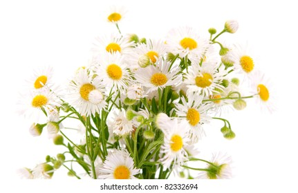 bouquet of daisies field on a white background