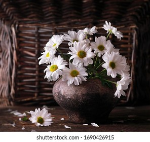 A bouquet of daisies in an old pot on the background of a wicker fence.