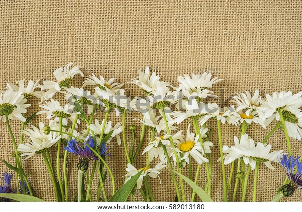 bouquet of daisies on sackcloth background