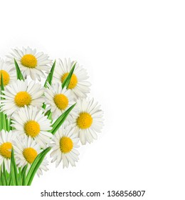 Bouquet of daisies on the white background