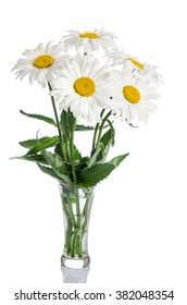bouquet of daisies on white background