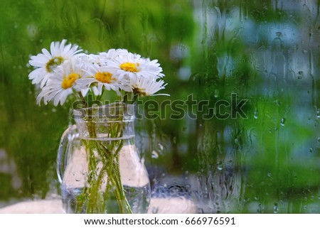 Bouquet Daisies Vase Behind Rainy Glass Stock Photo Edit Now