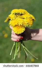 Bouquet of dandelions in hand on green