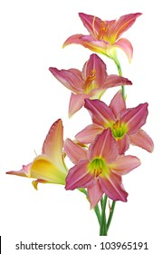 Bouquet of day lily flowers isolated on white