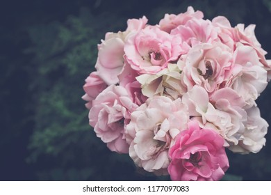bouquet of delicate pink roses closeup, in garden, vintage style, pastel color