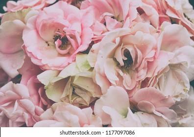 bouquet of delicate pink roses closeup, vintage style, pastel color