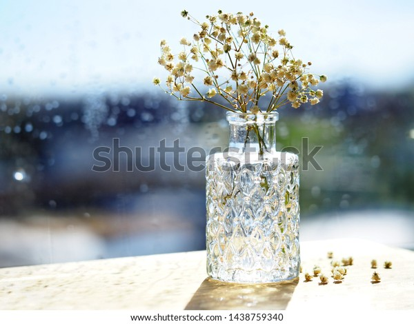 Bouquet of dried Baby's breath flowers in glass bottle on on blurry window view background. Symbolic still life representing autumn season and melanholic mood.