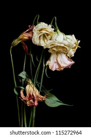 A bouquet of dried dying flowers on a black background