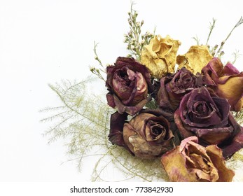 Bouquet of dried rose flowers on white background