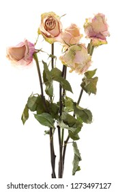 Bouquet of dried roses standing, isolated
