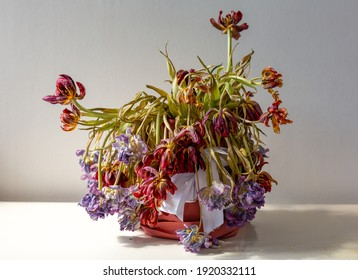 bouquet of dried withered flowers tulips in a pot in the sunlight