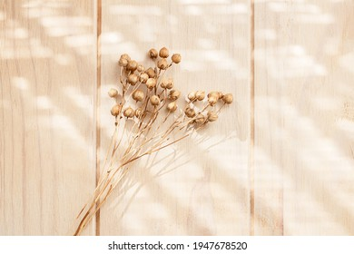 Bouquet of dry flax plant on a wooden neutral pastel beige background with shadows. Soft focus. Monochrome minimalist floral background with copy space. Flat lay.