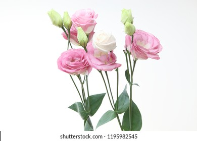 bouquet of eustoma in a white background