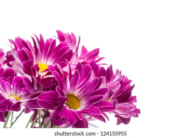 bouquet of few pink chrysanthemum on white