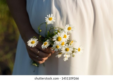 Bouquet of field camomiles against the background of a green grass. A camomile chrysanthemum in a hand. White beautiful daisies for a card.