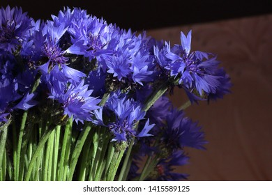 Bouquet field cornflowers. Cornflower or Blue (Centaurea cyanus), with spider-woolly linear-lanceolate leaves and blue flowers.