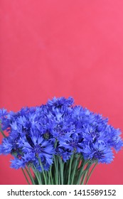 Bouquet field cornflowers. On a red background. Cornflower or Blue (Centaurea cyanus), with spider-woolly linear-lanceolate leaves and blue flowers.