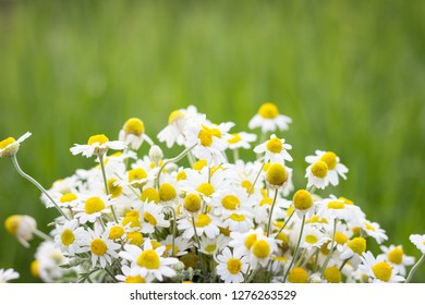 bouquet of field daisies, closeup, natural background