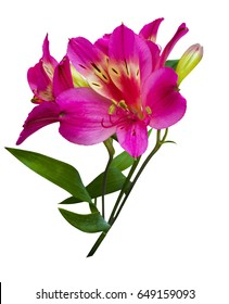 Bouquet of flowers alstroemeria isolated on white background