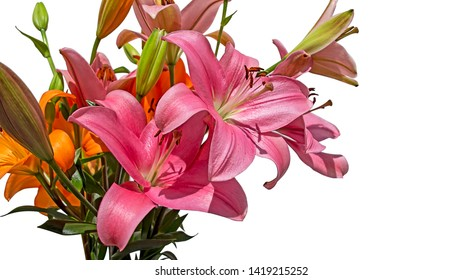 bouquet flowers of Lily Asiatic Brunello and Lilium 'Boardwalk' isolated on a white background