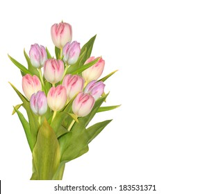 bouquet flowers tulips  on white background