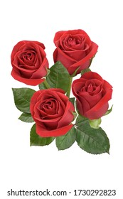 A bouquet of four red roses on a white background. Isolated.
