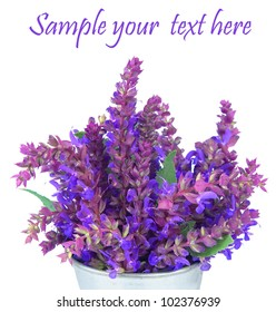 Bouquet of a fragrant sage flowers on a white background