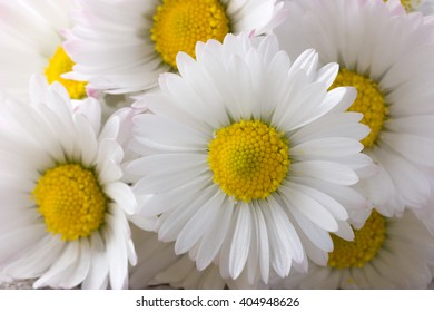 Bouquet of fresh daisies as background