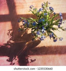 Bouquet of the fresh forget-me-nots (Myosotis arvensis)
