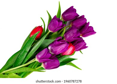 Bouquet of fresh lilac tulips on white isolated, top view.