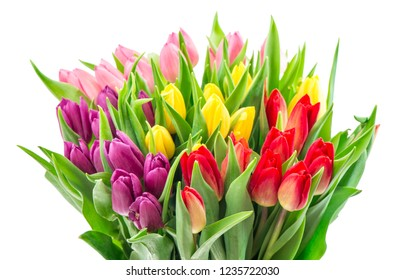 Bouquet fresh multicolor tulip flowers isolated on white background