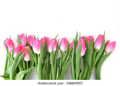 bouquet of fresh pink tulips