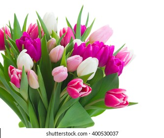 bouquet of fresh purple, pink and white tulip flowers close up isolated on white background