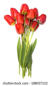 Bouquet of fresh red tulips.