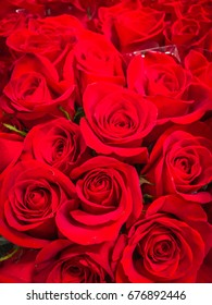 Bouquet of fresh red wedding roses, flower bright background. Sign of love.