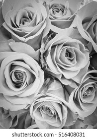 Bouquet of fresh roses, flower bright background. Black and white.