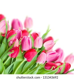 bouquet of fresh spring pink  tulips isolated on white background