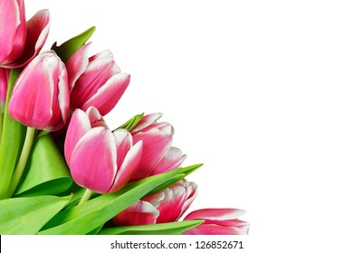 A bouquet of fresh tulips