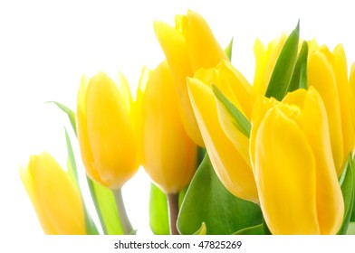 Bouquet of the fresh tulips over white