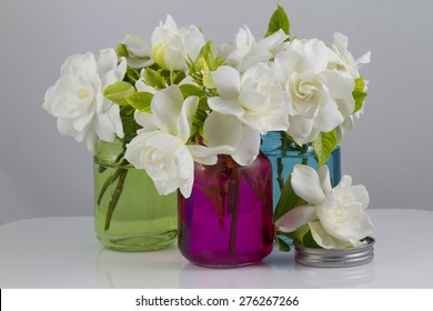 Bouquet of fresh White Gardenias placed in small red, green and blue mason jars on white or black background as a decoration for a table
