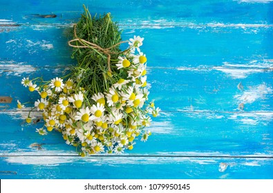 Bouquet of Freshly Picked Camomile Flowers Tied with Twine on Aged Plank Wood Blue Background. Beauty Skin Care Healthy Infusions Tea Detox Concept. Process of Drying Herbs. Poster Banner Copy Space