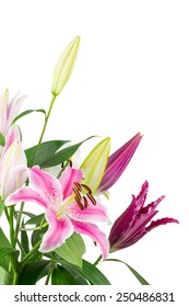 Bouquet of fuchsia pink stargazer lilies isolated on white background.
