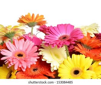 The bouquet gerbera flower as a background