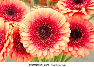 Bouquet of  gerberas in a vase, close-up