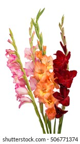 bouquet of gladiolus on a white background