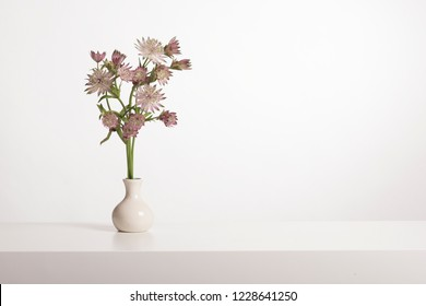 Bouquet of great masterwort flowers in a white vase in a white interior wih copy space